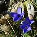 wunderschöne Blumenwelt