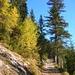 Praktisch alleine auf dem Aufstieg durch den herbstlichen Wald