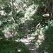 Hier zweigt der Pfad nach Gadöl (LK:Igadeel) / Schwendi ab; [tour64000 beschrieben] von [u dani_]