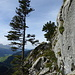 kurze Querung zum Westgrat am Kleinen Hundstein