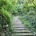 ....che si trasforma in scalinata e sale verso Caldana e Cerro.
