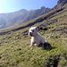 zufriedener Hunde-Berg-Blick