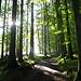 schönes Waldstück im Aufstieg zur Alp Sellamatt