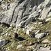 All'inizio del canale di salita. Notare la freccia rossa dietro la pecora sulla destra.