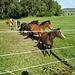 Lucky Horses II