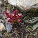 noch eine interessante Pflanze