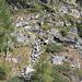 ancora una veduta, dal sentiero turistico, della scalinata in sasso/legno