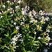 Wer kennt  diese Blume? Sieht aus wie ein Phlox. Aus Garten verwildert?