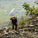 Der Aufstieg ist anstrengend, Alp Wäbern im Hintergrund