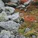 Fels und Gras