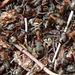 emsige Ameisen