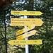 <b>Mi avvio proprio in direzione sud, verso l'Elferhütte, lungo un sentiero a serpentine, che si sviluppa in un bosco misto di larici e pini mugo. </b>