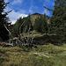 Blick von der Grenzschneise zum Ochsenälpeleskopf / vista dalla pista tagliata nel bosco della dogana all`Ochsenälpeleskopf