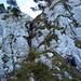 Die Leitern hinunter vom Gipfel