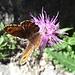 Fauna und Flora
