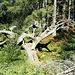 Eine tolle Naturholz-Skulptur