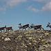 Le renne più da vicino!!!