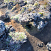 Auf dem Vulkanhügel gibt es auch schon einige rauchende Schlote.