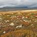 Rondane im Herbstkleid. Leider sieht man die verschneiten Berge nicht und ein blauer Himmel würde das Bild abrunden.