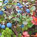 Die Rondane ist bekannt für die schönen Herbstfarben.