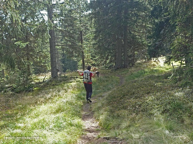 ...weiter durch den Wald