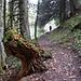 Der Aufstieg von Furggels auf den Pizalun verläuft grösstenteils auf Waldwegen.