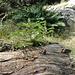 Bäumchen wechst auf Baum