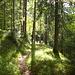 ...zurück im Ammerwald