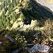 fast senkrecht gehts runter bzw. rauf auf den Grünhorn Vorgipfel