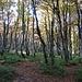 Im Wald bei Trois Fois