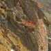 herbstliche  Felsen am Schilthorn