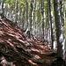 sentiero nel bosco sopra Carena