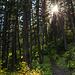 Die Sonne glitzert durch den dichten Wald