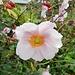 ... und Gartenblumen und -früchte
