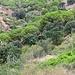 Grün- und Rottöne im Abstieg