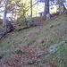 lunga discesa nel bosco