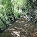 <b>Il sentiero sale nella Valle di Selvano. Superato il ponte sul Riale Selvano mi immetto su una stradina forestale, utilizzata fino agli anni sessanta dai contadini per portare a casa la legna, dapprima con carri trainati da buoi, in seguito con trattorini agricoli. </b>