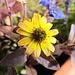 Botanische Farbtupfer gab es heute nur auf Sareis