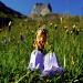 Campanule barbue dans les champs fleuris en montant vers la Bundstock