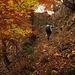 und weiter durch den herbstlichen Wald. Oben sieht man schon die Felsen und somit das Ende des Weges.