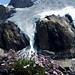 Gypsophila repens sur fond glaciaire