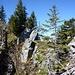 Wannelsgrat: Wald,Totholz und Felszähne.