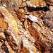1) Eisenspuren b d. Font. Nostra (unter d. Porteille Valmanya)
