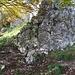 """Nach dem Wanderweg mit Beschilderung, direkt zum Berg in etwa 80m trifft man auf diese Feuerstelle (Bildmitte) Für die """"Est"""" route 15m nach links hoch zum Einstieg. Der T5 Aufstieg zum Sasso Grande Gipfel nach rechts."""