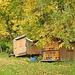 ... wie auch diese Bienenhäuser - und der Herbstwald - zu gefallen wissen