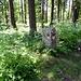 Grenzstein im Wald zum Stützli hoch