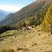 bereits bei der noch tiefer gelegenen Alpe Forcarid