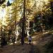 Wandern im herbstlichen Wald