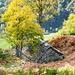 Der Herbst hält Einzug auf Coo der Preda