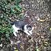 Dieses Kätzchen traf ich mitten im Wald im Anstieg und sie ging eine ganze Weile mit mir mit.